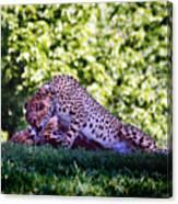 Cheetahs In Love Canvas Print