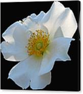 Cherokee Rose On Black Canvas Print
