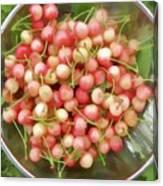 Cherries 8 Canvas Print