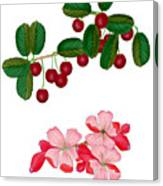 Cherries And Cherry Blossoms Canvas Print