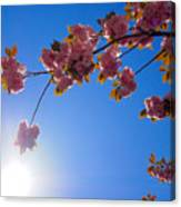 Cherries In The Sky Canvas Print