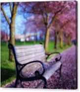 Cherry Blossom Bench Canvas Print