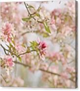 Cherry Blossom Delight Canvas Print