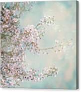 Cherry Blossom Dreams Canvas Print
