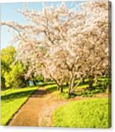 Cherry Blossom Lane Canvas Print