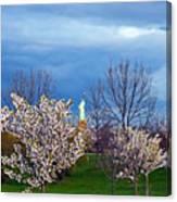 Cherry Blossom Liberatum Canvas Print
