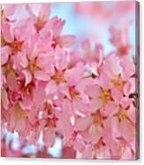 Cherry Blossom Pastel Canvas Print