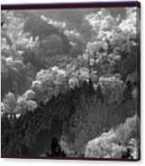 Cherry Blossom Season In Japan Mountain Hills Trees Photography By Navinjoshi At Fineartamerica.com  Canvas Print