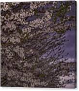 Cherry Blossom Sky Canvas Print