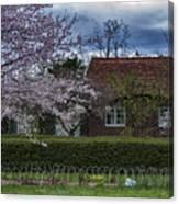 Cherry Blossom Time Canvas Print