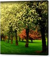 Cherry Blossom Trees Canvas Print