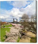 Cherry Blossom Trees At Portland Waterfront Canvas Print