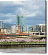 Cherry Blossom Trees At Portland Waterfront Park Canvas Print