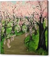 Cherry Blossom Walk Canvas Print