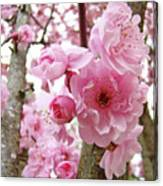 Cherry Blossoms Art Prints 12 Cherry Tree Blossoms Artwork Nature Art Spring Canvas Print