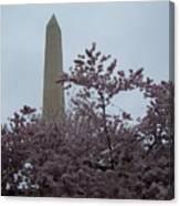 Cherry Blossoms At The Washington Monument Canvas Print