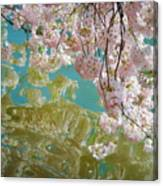 Cherry Blossoms Close Up Six Canvas Print