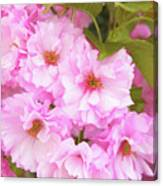 Cherry Blossoms I  Canvas Print