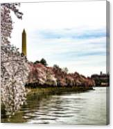 Cherry Blossoms In Bloom Canvas Print