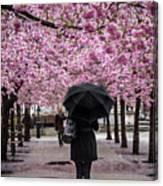 Cherry Blossoms In The Rain Canvas Print