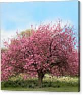 Cherry Grove Canvas Print