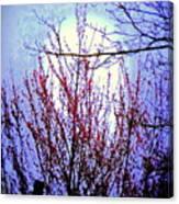 Cherry Moon Canvas Print