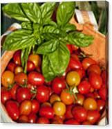 Cherry Tomato Harvest Canvas Print