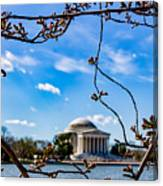 Cherry Tree Buds Canvas Print