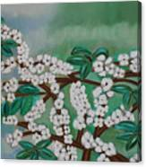 Cherry Tree Rich In Flowers Canvas Print
