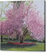 Cherry Tree Madison Square Park Canvas Print