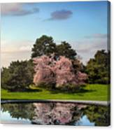 Cherry Tree Reflections Canvas Print