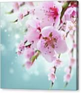 Cherry Tree Twig On Blue Canvas Print