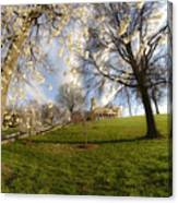 Cherry Trees In Bloom In Nashville Canvas Print