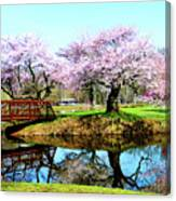 Cherry Trees In The Park Canvas Print