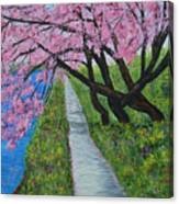 Cherry Trees- Pink Blossoms- Landscape Painting Canvas Print