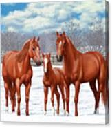 Chestnut Horses In Winter Pasture Canvas Print