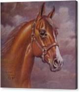 Chestnut Quarter Horse Canvas Print