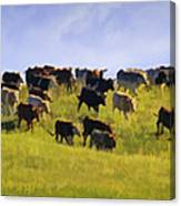 Cheyenne Cattle Roundup Canvas Print