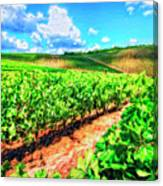 Chianti Vineyard In Tuscany Canvas Print