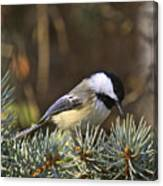 Chickadee-10 Canvas Print