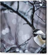 Chickadee Rain Canvas Print