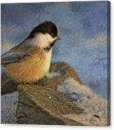 Chickadee Winter Perch Canvas Print