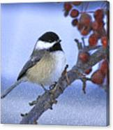 Chickadee With Craquelure Canvas Print