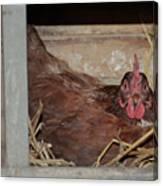 Chicken Box Canvas Print