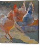 Chicken Feed Canvas Print