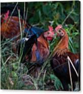Chickens Canvas Print