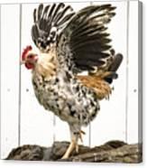 Chickens In Bird In Hand 2 Canvas Print