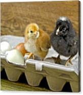 Chicks And Eggs Canvas Print