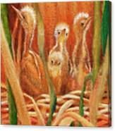 Chicks In The Reeds Canvas Print