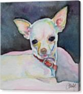 Chihauhau puppy Canvas Print